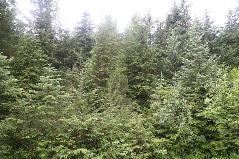 Juneau 561