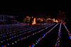 2011 Christmas Lights-160