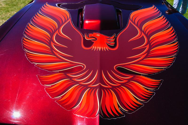 1977 Pontiac-Trans AM