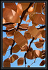 """Leaves of Copper </font> <font color=""""Orchid"""">Thank You for Making this Daily Photo the <font color=""""Orange"""">#3 Pick<font color=""""Orchid""""> on 04/20/2013 </a></font>  </font> <a href=""""http://www.rickwillis-photos.com/Portfolio/Best/Hidden-Photos-Without-Frames/26709550_DZD78d#!i=2466478734&k=ptgrRSX""""> <font color=""""Red"""">Link to Photo Without Frame</a> </font> <font color=""""Grey"""">"""