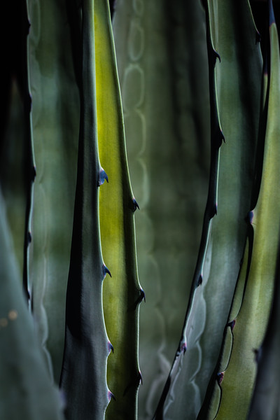 Cactus - Abstract
