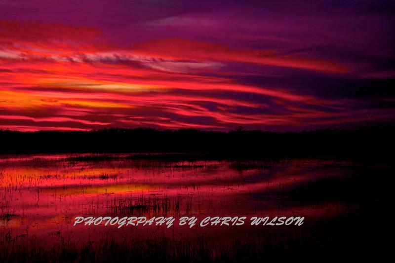 Everglades_01-21-12_0294