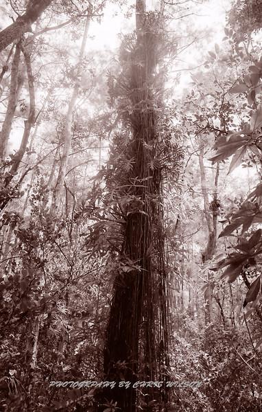 Everglades_06-13-12_0112