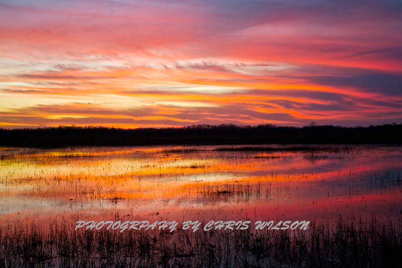 Everglades_01-21-12_0293