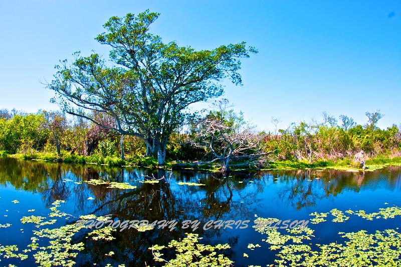 Everglades_03-12-11_0110