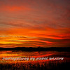 Everglades_01-21-12_0284