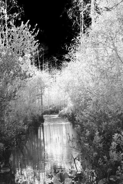 Everglades_02-25-07_0092