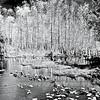 Everglades_02-26-07_0096