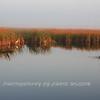 Everglades_12-23-10_0119