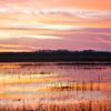 Everglades_01-21-12_0283
