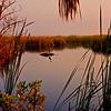 Everglades_12-23-10_0120