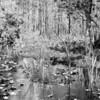 Everglades_02-26-07_0095