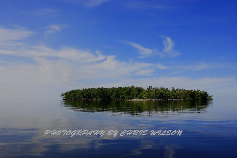 Everglades_01-09-10_0100
