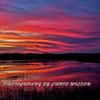 Everglades_01-21-12_0288