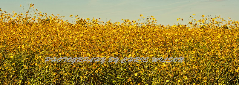 Everglades Flowers HDR 01