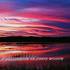 Everglades_01-21-12_0295