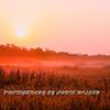Everglades_12-23-10_0118