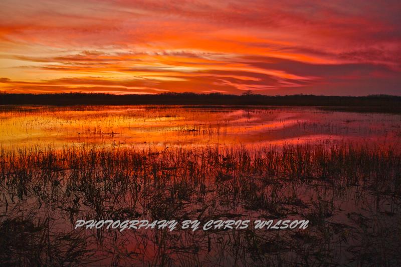 Everglades_01-21-12_0285