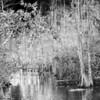 Everglades_02-26-07_0098