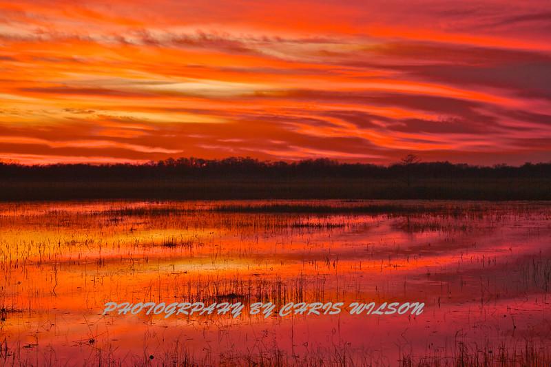 Everglades_01-21-12_0289