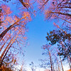 Everglades_01-21-12_0104