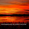 Everglades_01-21-12_0282