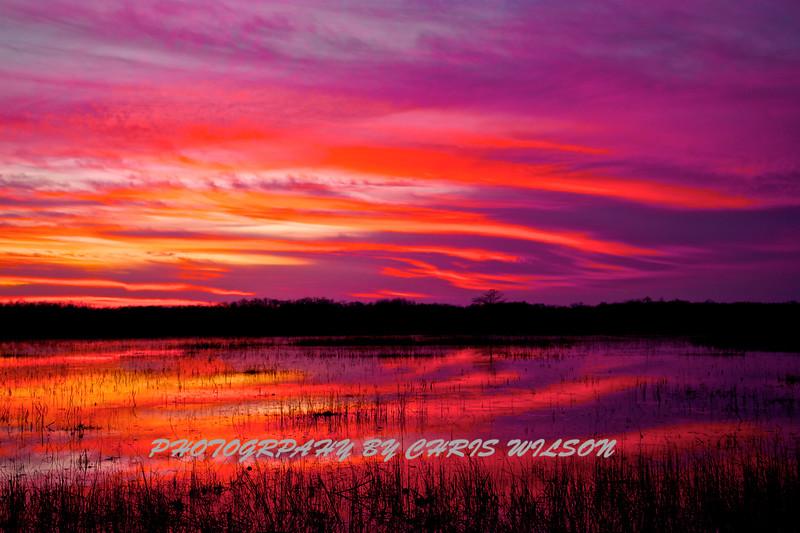 Everglades_01-21-12_0286