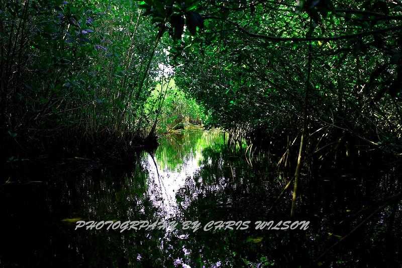 Everglades_12-25-09_0113