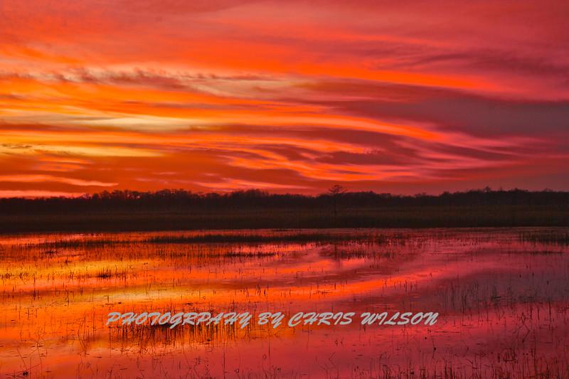 Everglades_01-21-12_0287