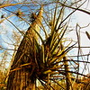 Everglades GG HDR 1