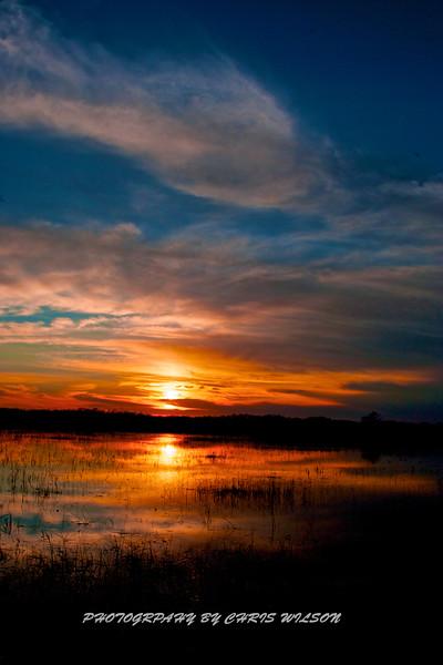 Everglades_01-21-12_0278