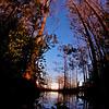 Everglades_01-21-12_0107
