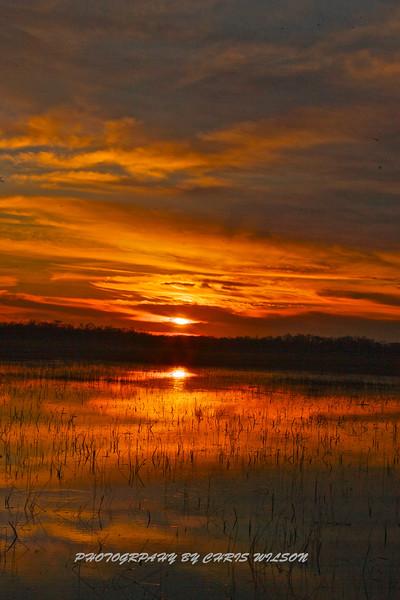 Everglades_01-21-12_0279