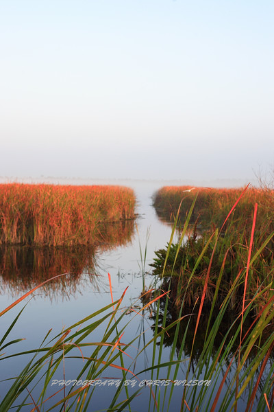 Everglades_12-23-10_0121