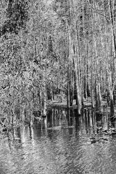 Everglades_02-26-07_0097
