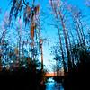 Everglades_01-21-12_0106