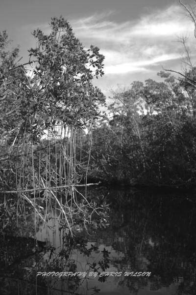 Everglades_01-09-10_0103