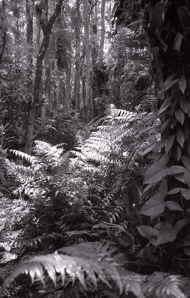 Everglades_06-13-12_0111