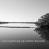 Everglades_12-22-10_0115