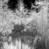 Everglades_02-25-07_0091