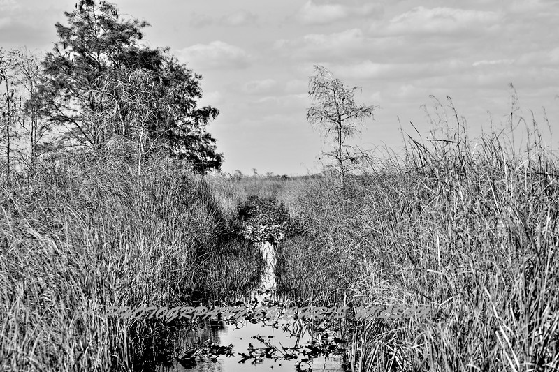 Airboat Everglades HDR 1