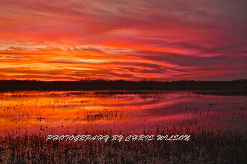 Everglades_01-21-12_0292