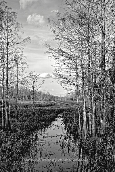 Airboat Everglades HDR 3