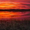 Everglades_01-21-12_0296
