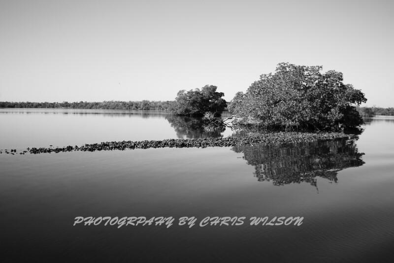 Everglades_12-22-10_0114