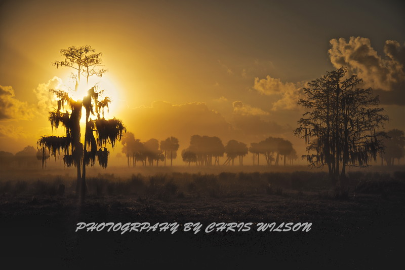 Everglades Sunrise Fog HDR 001