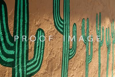 Cactus in Morrison