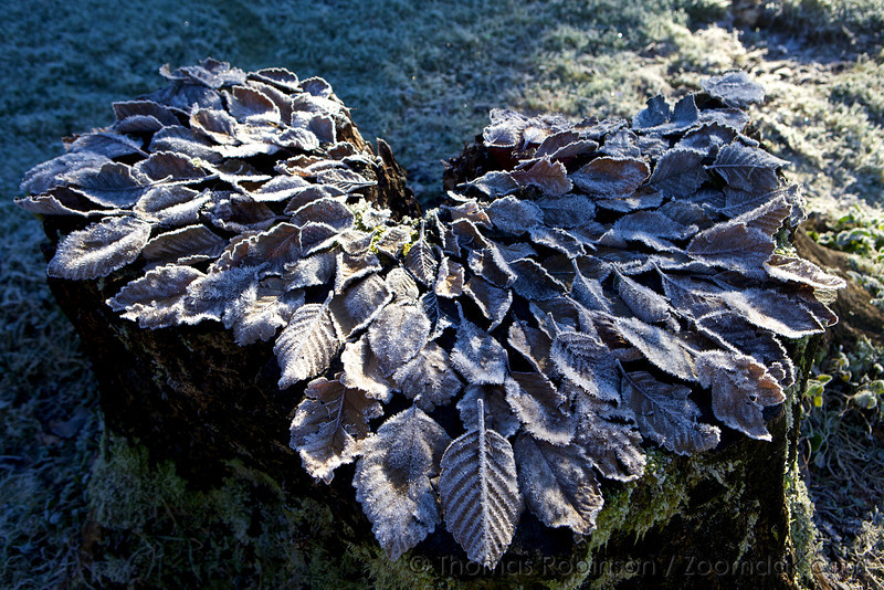 A faux Andy Goldsworthy art piece shows a stump covered with leaves arranged from large to small.