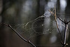 A spider rebuilds its web on a sunny morning on Saddle Mountain.