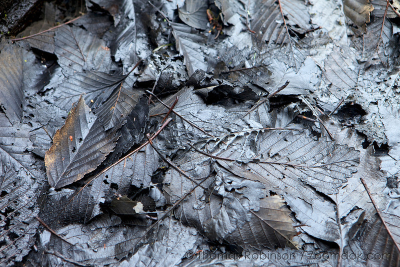 Macabre Leaves, Soapstone Lake